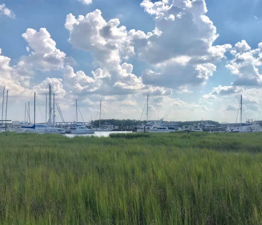 City Marina and marshlands