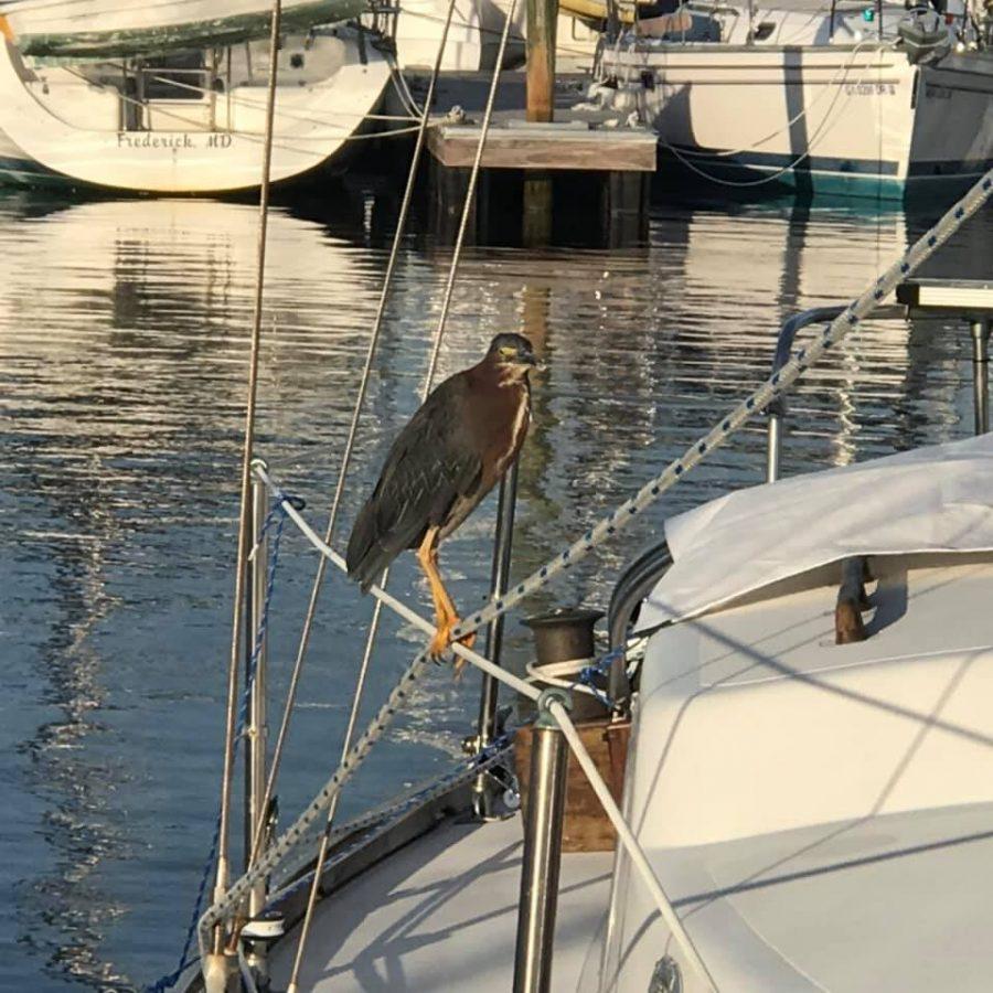 SS2 - Bird taking in the morning sun