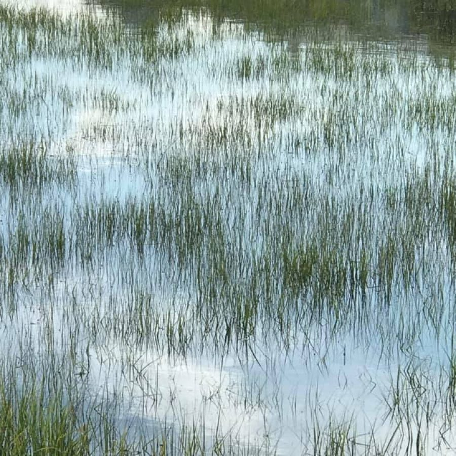 SS2 - Marshes