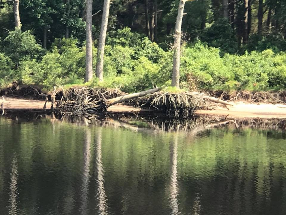 Route 1 - The Alligator-Pungo Canal