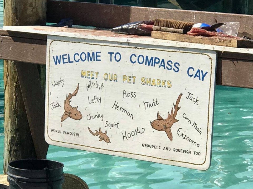Compass sharks